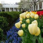 La primera dama hará una reforma en el Jardín de la Rosaleda de la Casa Blanca