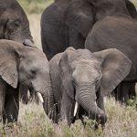 African Wildlife Foundation anuncia un programa ampliado de safaris virtuales para 2021