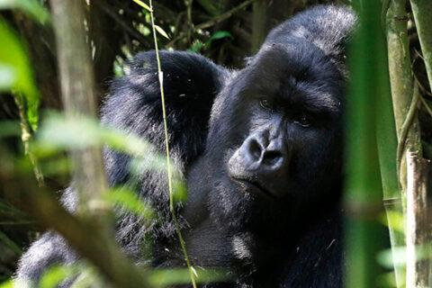 AWF anuncia el regreso exitoso de un safari de vida silvestre en persona en países africanos